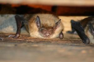 bats3lg